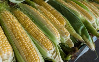 Fresh Corn and Pepper Salad