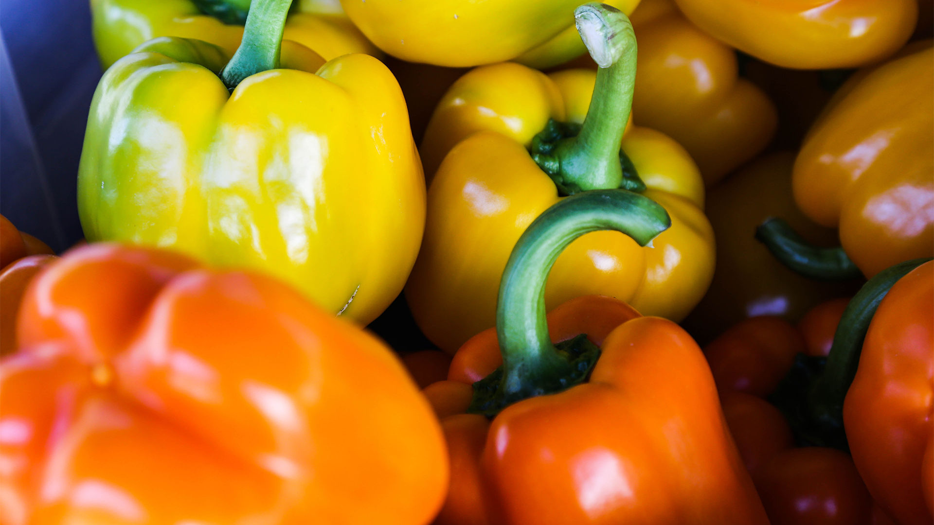 Warm Westerly Breezes - multi colored peppers