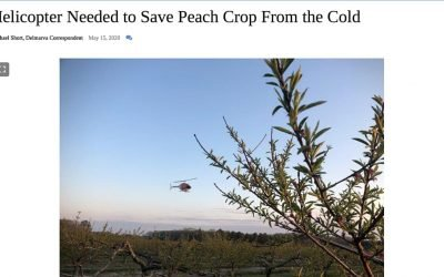 Cold Spring Leads to Extraordinary Efforts to Save Crops